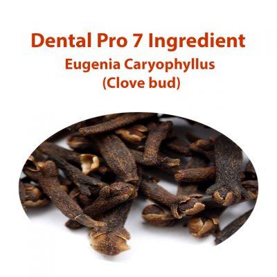 Best Dental Pro 7